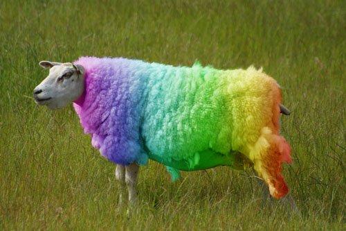quot racistquot  baa baa black sheep